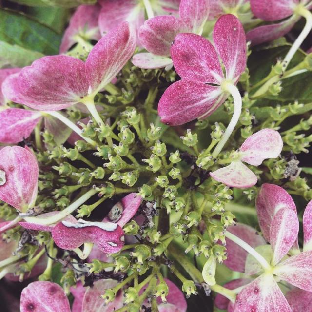 M O N D A Y flowers  Bonne journehellip