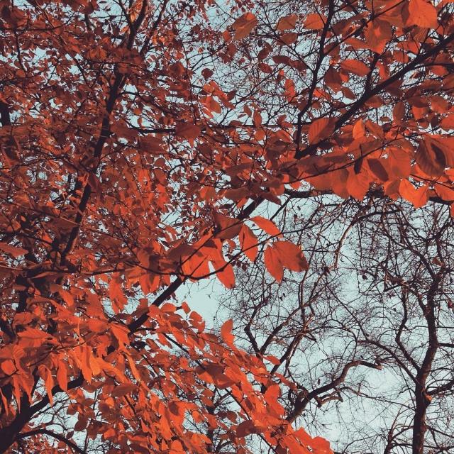 More beautiful autumn colors before winter Bonne journe