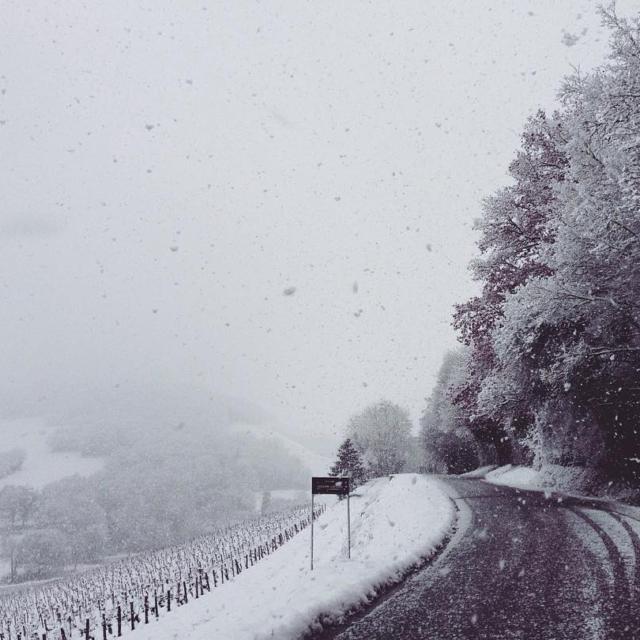 Magic winter vineyard landscape in Loire Valley