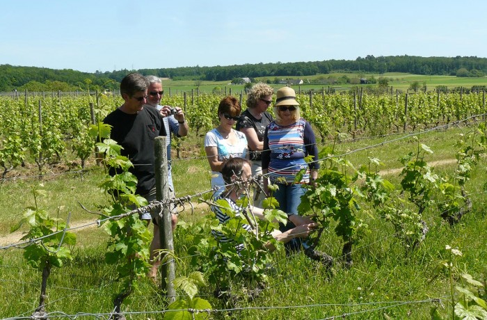 Loire-Wine-Discovery-700x460