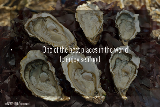 Brittany Travel Guide - Oysters