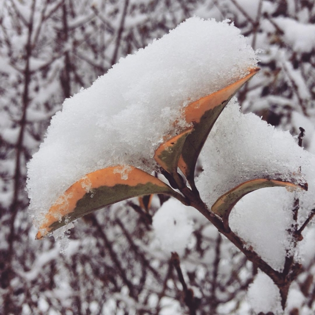 Welcome MARCH ! The snow is back before the arrivalhellip