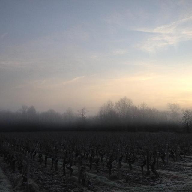 A Beautiful morning in Anjou  Bonne journe