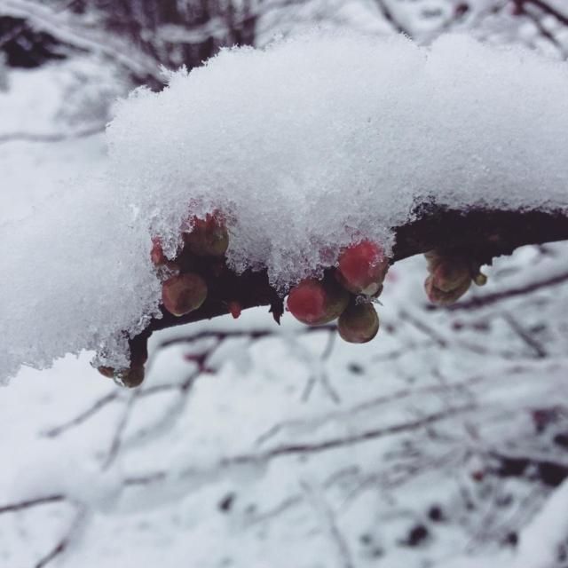 Snowy day in Loire Valley   Bonne journe