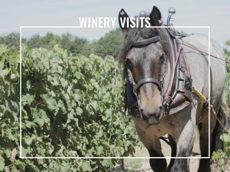 winery visits