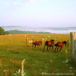 sejour authentique normandie horses normandy authentic trip