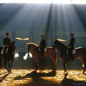 cadre noir horse fontevraud royal abbey
