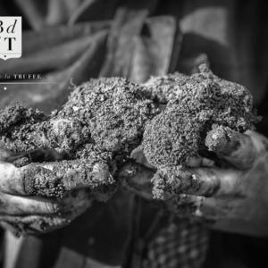 black diamond truffles truffes