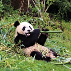 beauval zoo panda family holidays loire valley