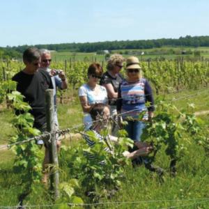 wine discovery vins val de loire