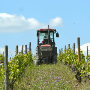 wine vineyard vins val de loire