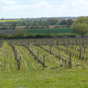 vineyard vins val de loire