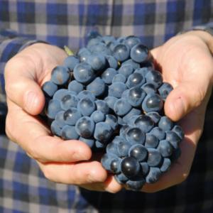 escapade viticole wine experience journee autour du vin wine escape loire valley autotour gourmand