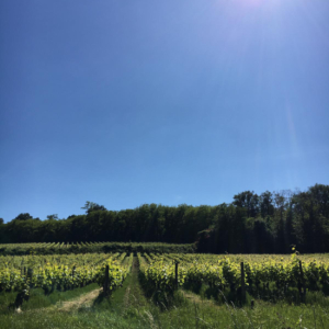 vignoble val de loire escapade viticole